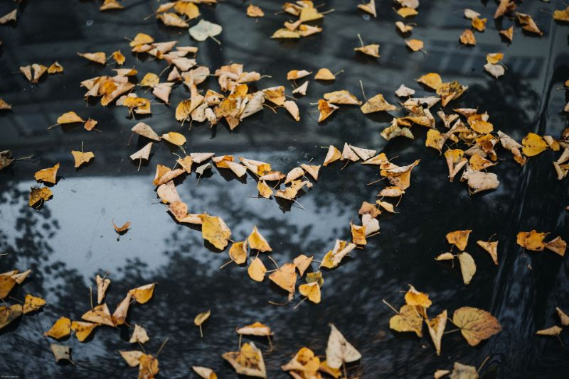 leaves on a car arragend as a heart